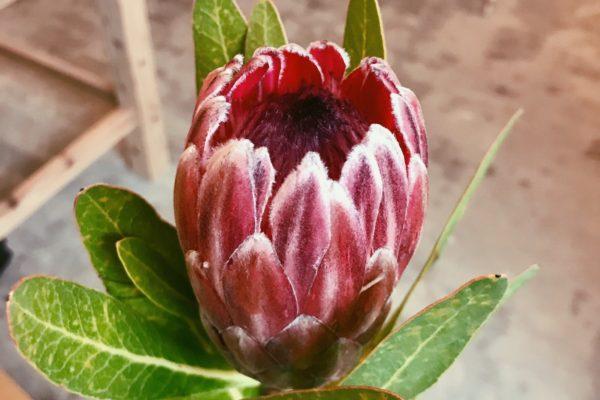 お花が入りました♥【熊本の花屋・バルーン専門店KIKI】