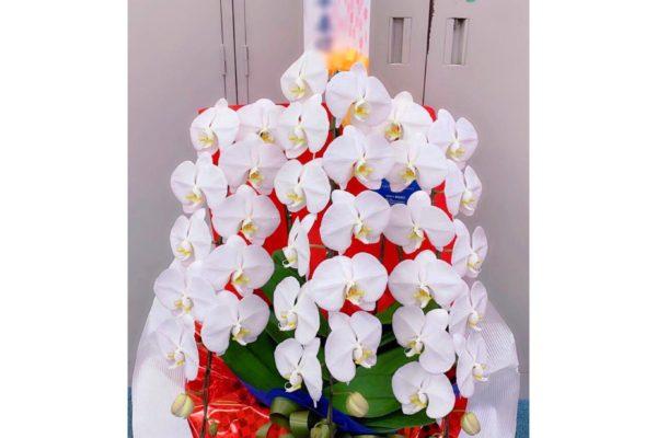 胡蝶蘭✿【熊本の花屋・バルーン専門店KIKI】